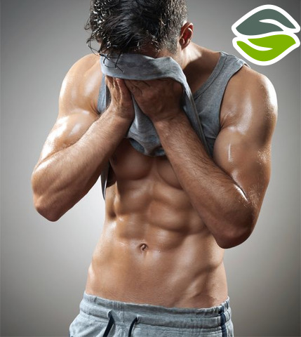 http://getmusclebuildingbase.com/ripped-nox/